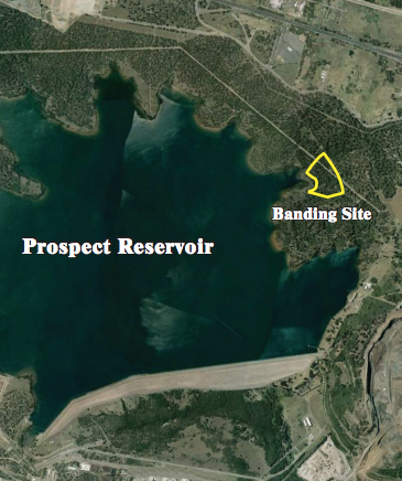 Banding Reports Area image